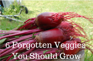 6 Forgotten Garden Vegetables You Should Grow. These staples will add variety to your garden and dinner plate! traditionalhomemaker.com