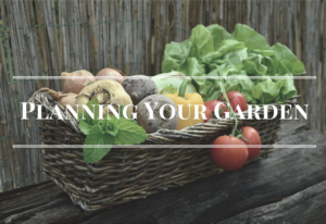 How to Plan your Garden so that once the weather is suitable for growing you are ready to grow! Garden planning