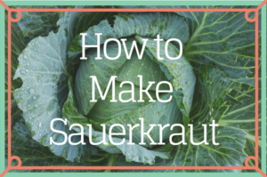 How to Make Sauerkraut the traditional and healthy way! traditionalhomemaker.com