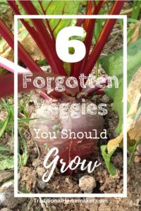 Try planting some of these forgotten garden vegetables that will expand your family's flavor pallet. A garden is a frugal, fun way to taste new foods!